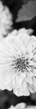White Bloom II by Susan Bryant