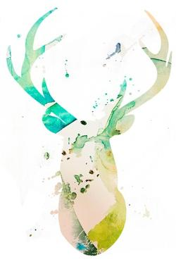 Youthful Deer II by Susan Bryant