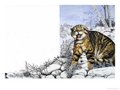 Nature's Kingdom: Hunter of the Highlands - the Wildcat