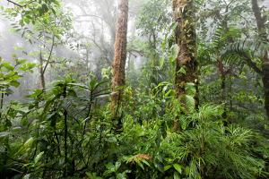 Monteverde Cloud Forest Reserve, Costa Rica by Susan Degginger