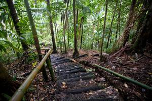 Rainforest Path, Southern Dominica, West Indies by Susan Degginger