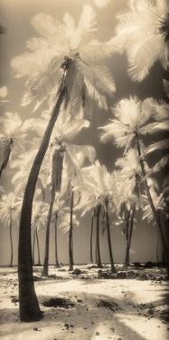 Palm Shadows I by Susan Friedman