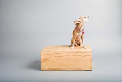 Small Dog, Big World by Susan Sabo