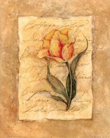 Cottage Tulip by Susan Winget