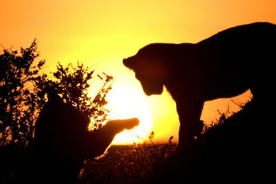 Lion Cub Morning
