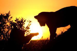 Lion Cub Morning by Susann Parker