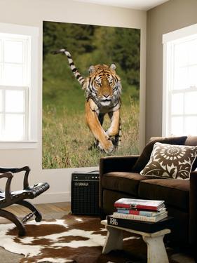 Tiger Run by Susann Parker