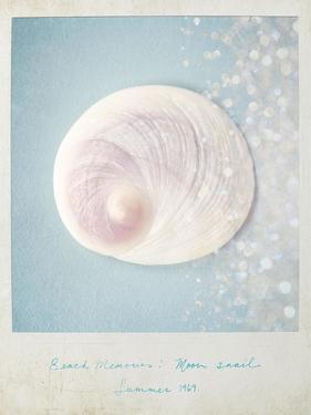 Beach Memories Moon Snail by Susannah Tucker