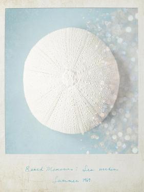 Beach Memories Sea Urchin by Susannah Tucker