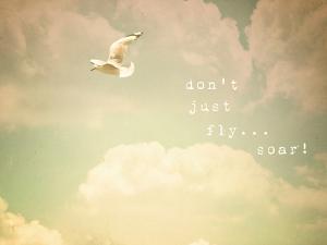 Don't Just Fly...Soar! by Susannah Tucker