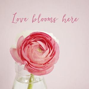 Love Blooms Here by Susannah Tucker