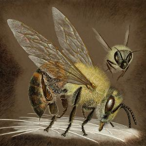 A Painting of an African Bee Injecting its Poison by Suzan Swain Firmage