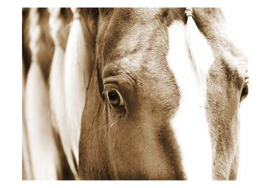 Barry Hart Tres Chic Western Animal Horse Photograph Print Poster 27x22