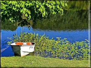 Country Pond Row Boat by Suzanne Foschino