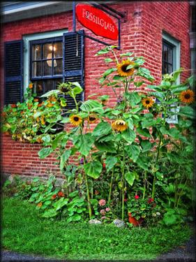 Country Store Sunflowers by Suzanne Foschino