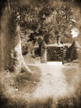 Wicklow Tree Line B by Suzanne Foschino