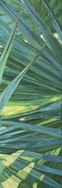 Fan Palm II by Suzanne Wilkins