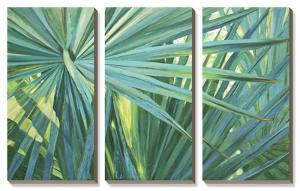 Fan Palm by Suzanne Wilkins