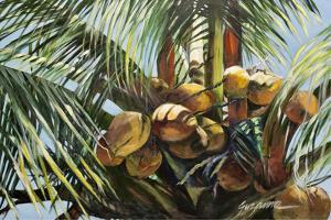 Los Cocos by Suzanne Wilkins