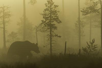 Morning Fog by Svein Ove Linde