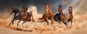 Desert Run by Svetlana