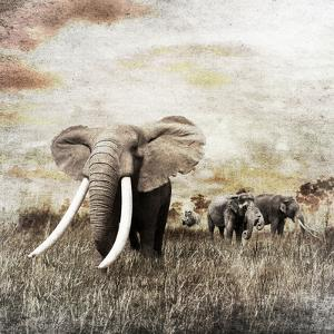 Grunge Image of Walking Elephants by Svetlana Foote