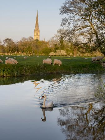 https://imgc.allpostersimages.com/img/posters/swan-in-front-of-salisbury-cathedral_u-L-Q1AVF0T0.jpg?p=0