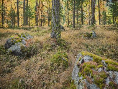 https://imgc.allpostersimages.com/img/posters/switzerland-graub-nden-canton-val-roseg-forest-floor-rock-larches_u-L-Q11YR3B0.jpg?p=0