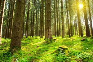 Sunlight in Forest. by swkunst