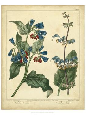 Garden Flora V by Sydenham Edwards