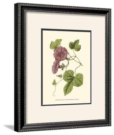 Blossoming Vine II by Sydenham Teast Edwards