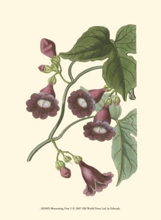 Blossoming Vine V by Sydenham Teast Edwards