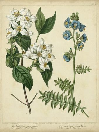 Cottage Florals I