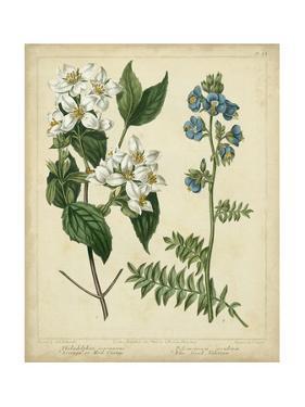 Cottage Florals I by Sydenham Teast Edwards