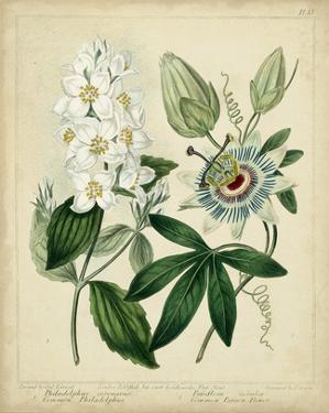 Cottage Florals II by Sydenham Teast Edwards
