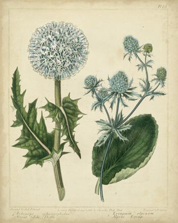 Cottage Florals III by Sydenham Teast Edwards