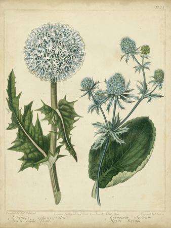 Cottage Florals III