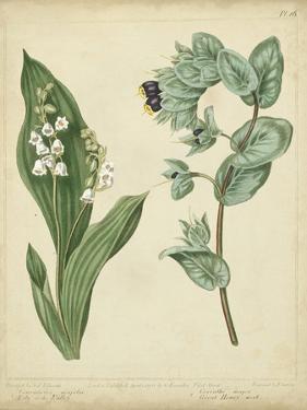 Cottage Florals IV by Sydenham Teast Edwards