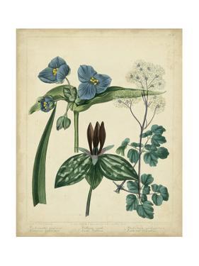 Cottage Florals V by Sydenham Teast Edwards