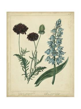 Cottage Florals VI by Sydenham Teast Edwards