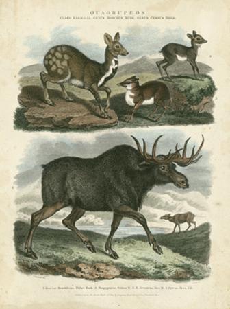 Deer and Moose by Sydenham Teast Edwards