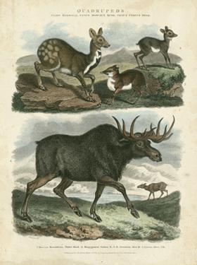 Deer & Moose by Sydenham Teast Edwards
