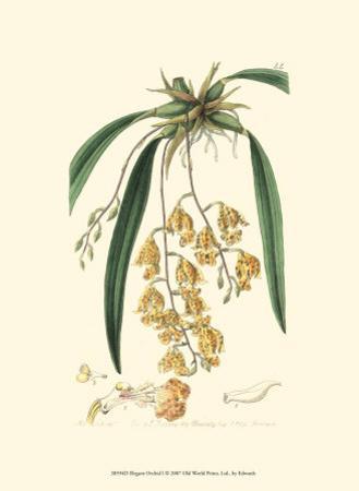 Elegant Orchid I by Sydenham Teast Edwards