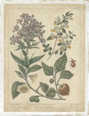 Enchanted Garden II by Sydenham Teast Edwards