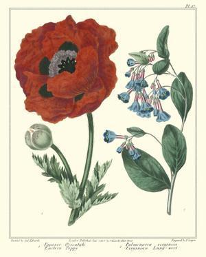 Gardener's Delight I by Sydenham Teast Edwards