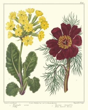 Gardener's Delight II by Sydenham Teast Edwards