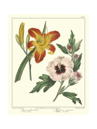 Gardener's Delight IV