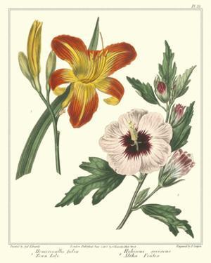 Gardener's Delight IV by Sydenham Teast Edwards