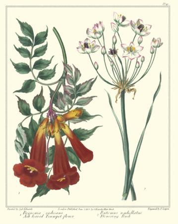 Gardener's Delight VI by Sydenham Teast Edwards
