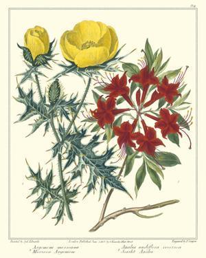 Gardener's Delight VII by Sydenham Teast Edwards